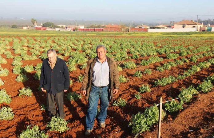 El terreno consta de dos fincas ubicadas en el Pinar de los Franceses. Muriel