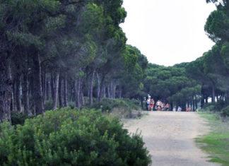 El Pinar es un enclave frecuentado por deportistas.